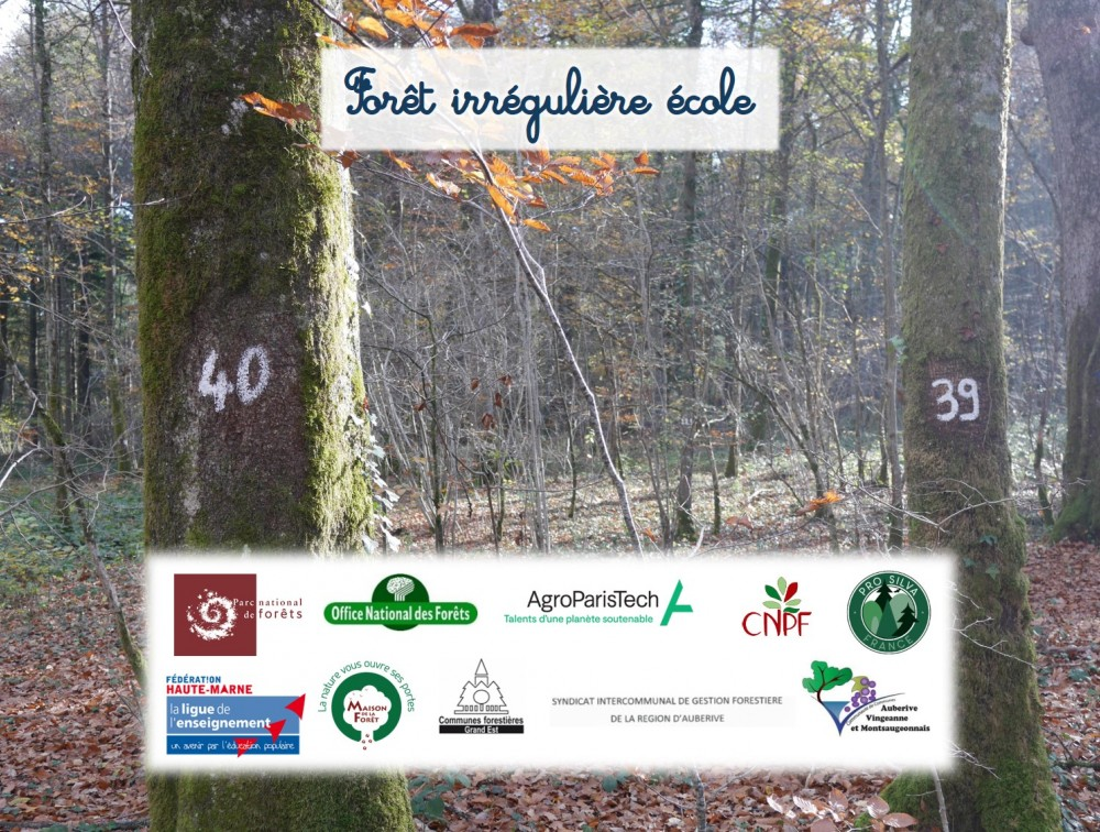 AgroParisTech recrute un chargé de mission pour la Forêt irrégulière école du Parc national de forêts