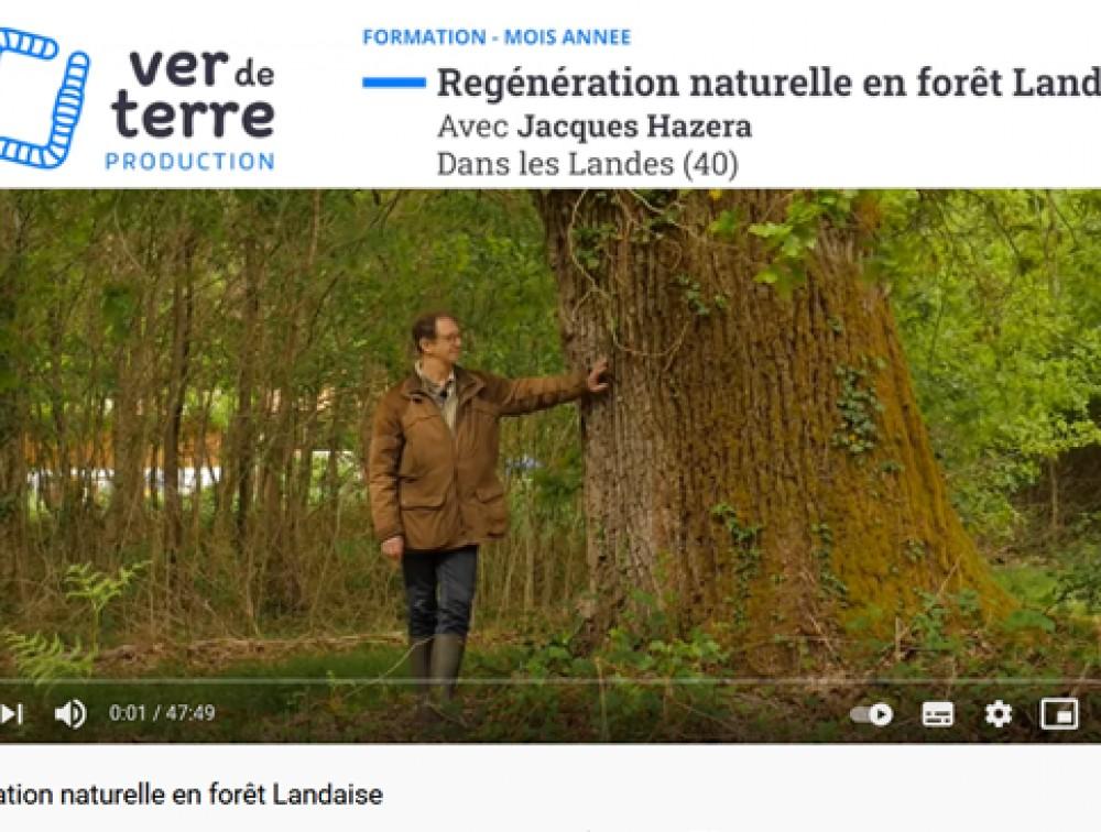 Vidéo sur la sylviculture à couvert continu appliquée au massif des Landes, par Jacques HAZERA.