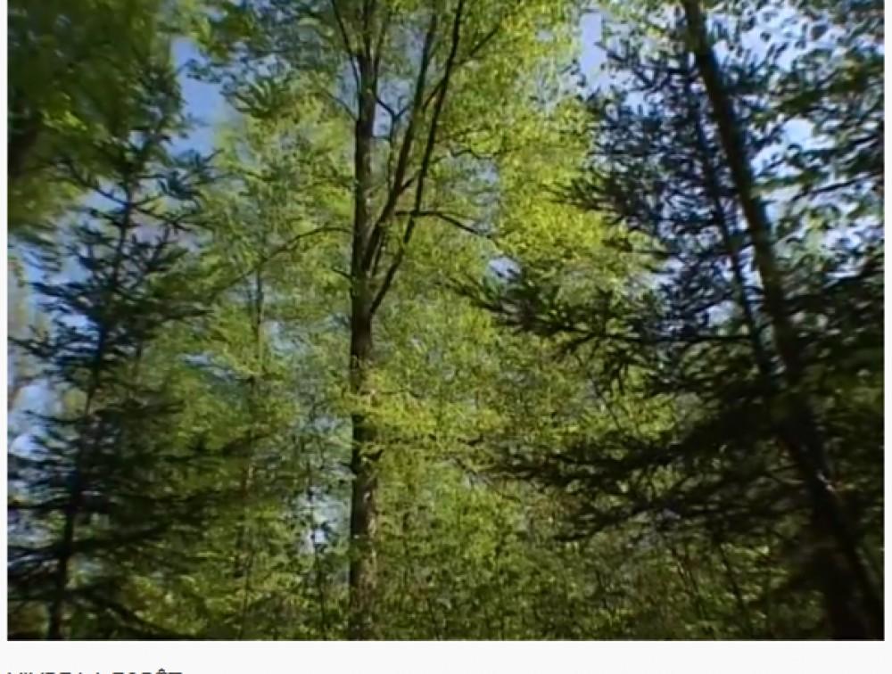 Film de l'Association Futaie Irrégulière (2003) - cours illustré de SMCC, avec d'éminents forestiers