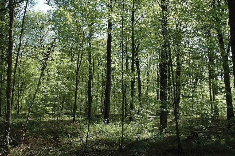 Vidéo de remesure d'une placette AFI dans le Groupement Forestier Vosges Nord