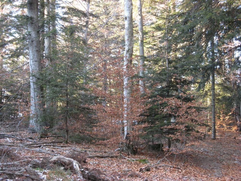 Vidéo sur la futaie jardinée dans le Haut-Jura, par Julien TOMASINI, Expert Forestier et Président de l'AFI