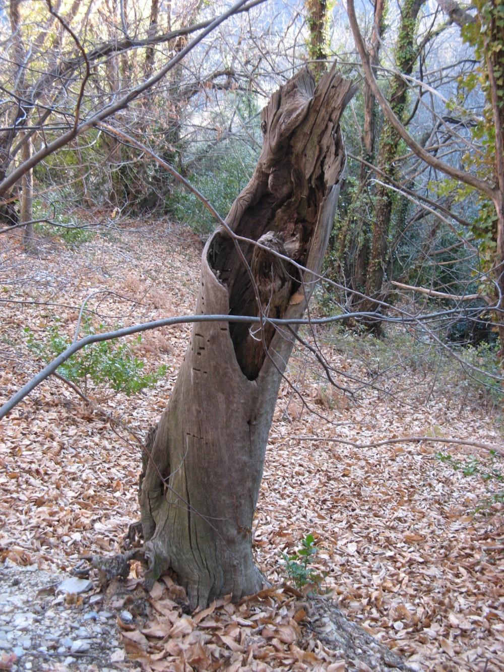 Trame de vieux bois en Livradois-Forez. Poursuite des travaux
