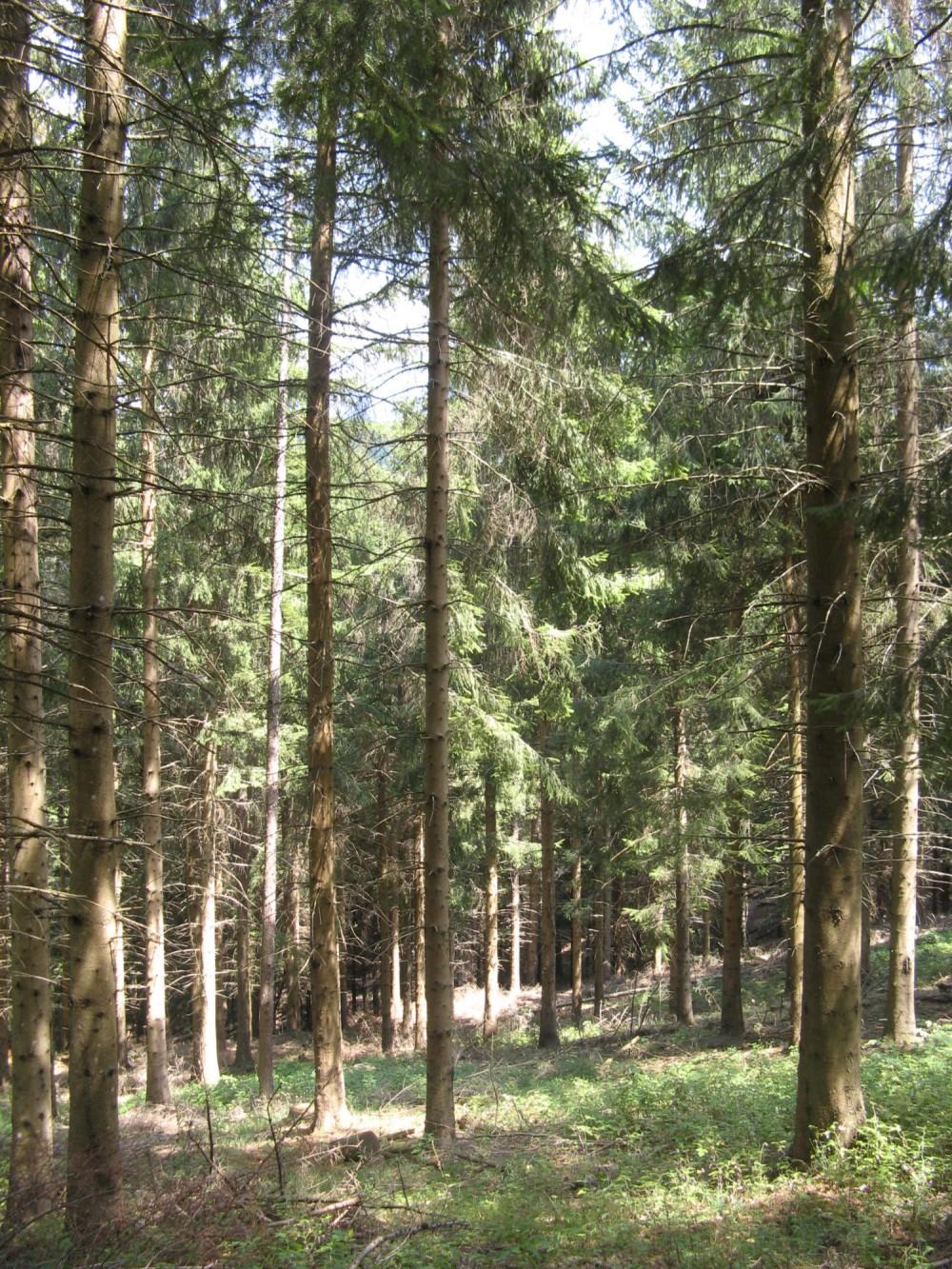 Tournée du Groupe Régional Auvergne-Limousin dans le Puy de Dôme - Gestion irrégulière des peuplements issus du FFN en limite stationnelle
