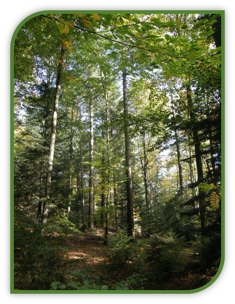 FORMATION : Comprendre et mettre en oeuvre le traitement irrégulier des forêts. Initiation à la sylviculture Pro Silva.